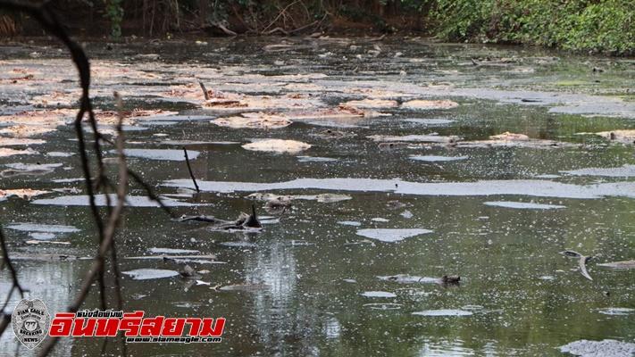 เพชรบุรี-หนุ่มท่ายาง นำซากหมูที่ตายจำนวนมากมาทิ้งในบ่อบำบัดน้ำเสียสร้างความเดือดร้อน