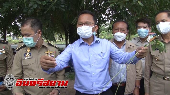 ชัยนาท-รมว.ยุติธรรมตรวจเยี่ยมการปลูกพืชสมุนไพรฟ้าทะลายโจรในเรือนจำ