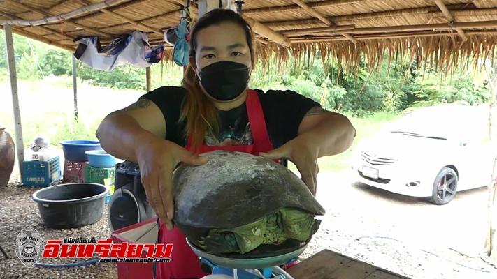 """ราชบุรี-""""เต่ายักษ์""""เข้าบ้าน เจ้าของบ้านเชื่อมาให้โชค"""